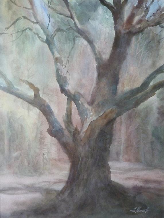 057 Старый дуб